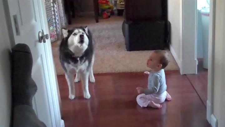 Hond en baby schreeuwen samen