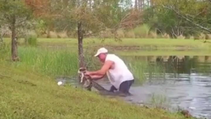 Un hombre libera a su cachorro de las fauces de un caimán