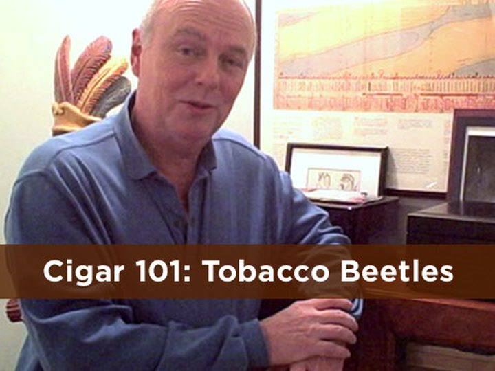 Cigar 101: Tobacco Beetles