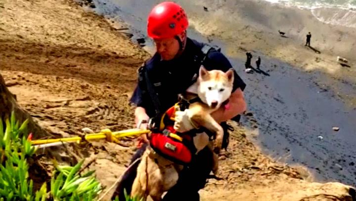 16 brannmenn måtte til for å redde hunden