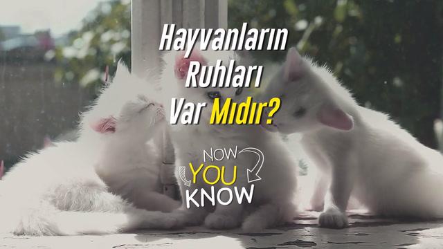 Now You Know - Hayvanların ruhları var mıdır?