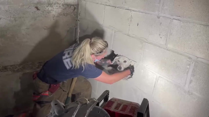 Dog reunited with owner after getting stuck in walls of house