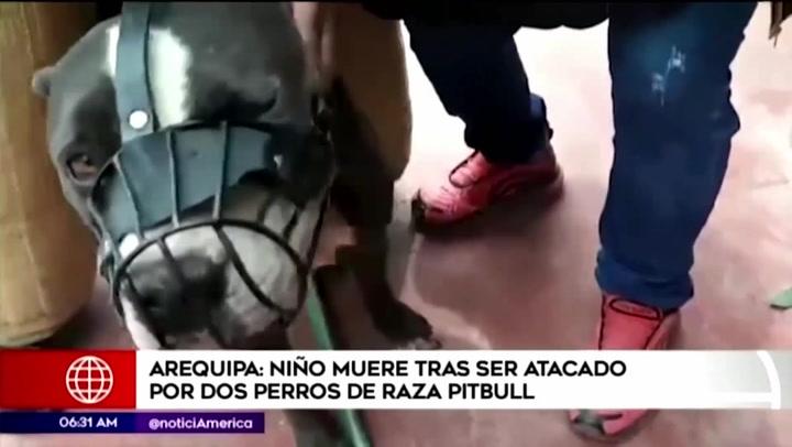 Arequipa: perros pitbull atacan y matan a niño de 6 años en su propia casa