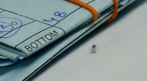 El viral de una hormiga que roba un diamante de una joyería