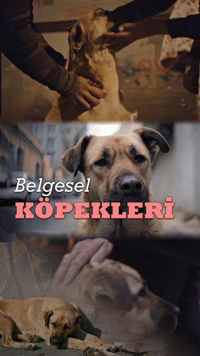 Sokak köpeklerimiz belgeselle geziyor!