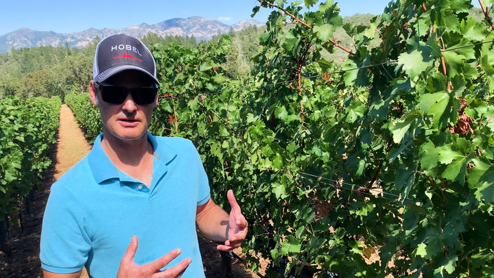 In the Vineyard at Hobel: Cluster Control