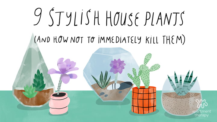 picturesque best large house plants. 5 Hard to Kill Houseplants for Apartments with Low Light  Apartment Therapy