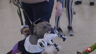 Therapy dogs dress up for Halloween at Poets Walk Henderson – Video