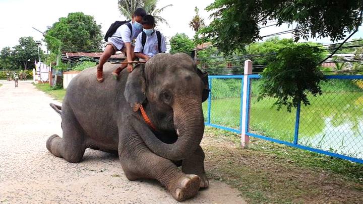 อมยิ้มรับเปิดเทอม เจ้าขุนเงิน ช้างสายเอนฯ พาน้องขี่หลังมาส่งหน้าโรงเรียน