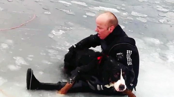 Se Ove redde hunden fra isen
