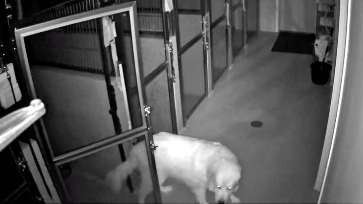 Ustoppelig hund rømte fra veterinær