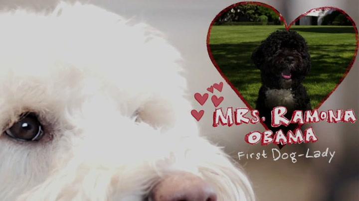 Hunden Ramona frir til presidentens hund