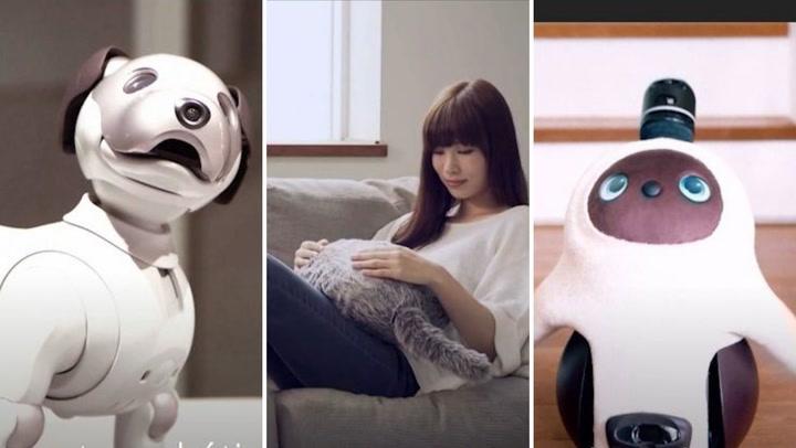 Robots: la amenaza tecnológica contra los perros y gatos