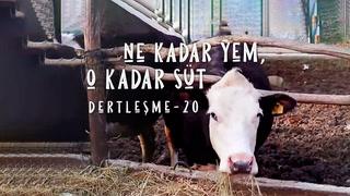 Dertleşme - Ne kadar yem, o kadar süt