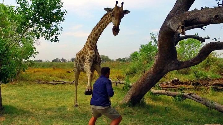 Naiv turist ville hilse på sjiraffen - angret umiddelbart