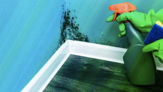 How to Get Rid of Mold in Your Home