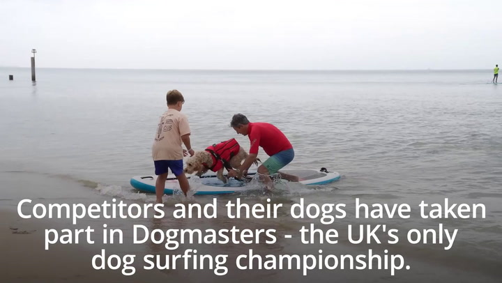 UK dog surfing championships take place after year off due to Covid