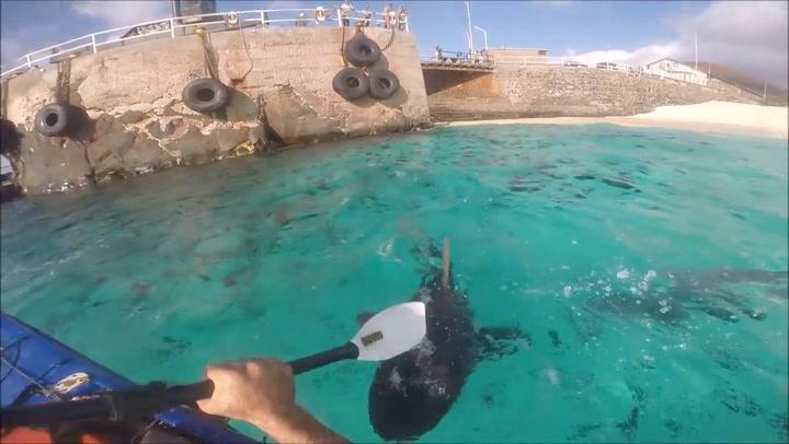 Padler slo haier med åre – nå raser dyrevenner