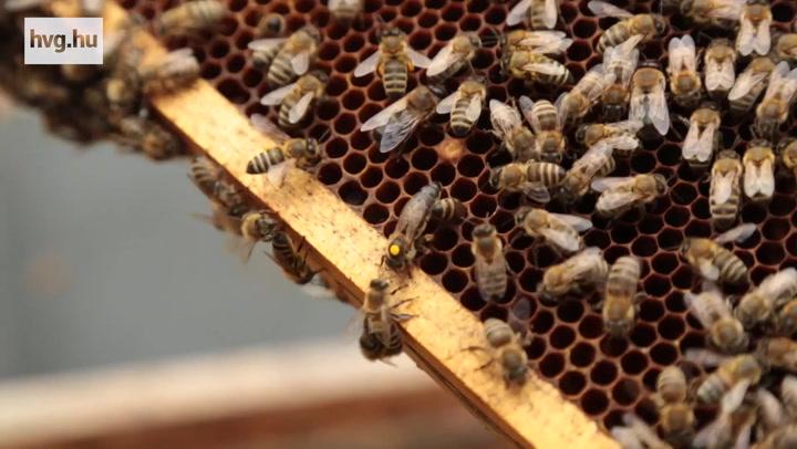 A Nemzet Napszámosa méhésznek állt