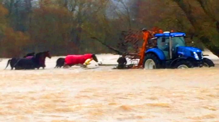 Traktor til unnsetning da hester var på dypt vann