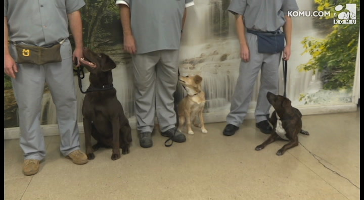 Puppies for Parole celebrates 5,000 adoptions