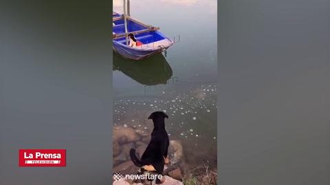 Viral: Perro salva a cachorro de morir ahogado en un río