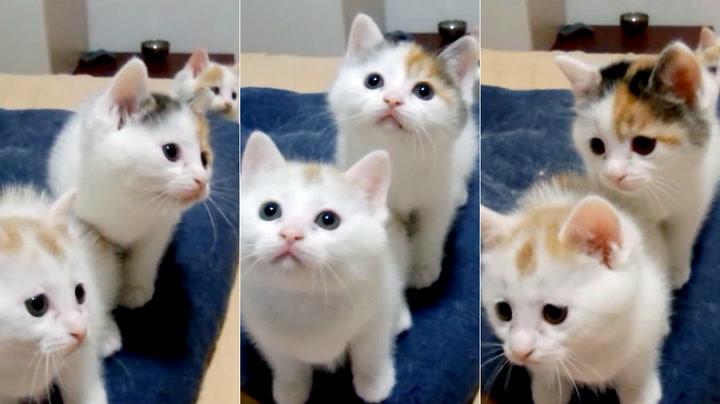 Ingenting får en til å slappe av som en gjeng søte, synkrone kattunger