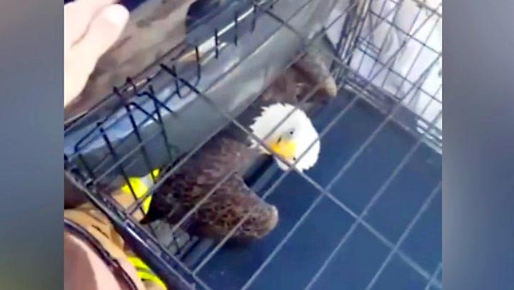 Ørn kappfløy med bilen – endte i grillen