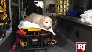 AMR and MedicWest training therapy dog for employees