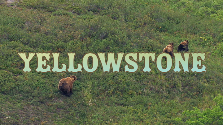 Visit Yellowstone: Things to Know Before Traveling to