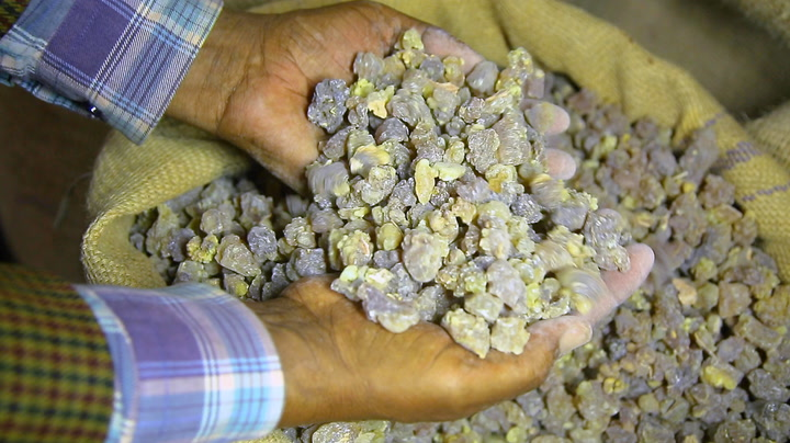 Why frankincense and myrrh are so expensive