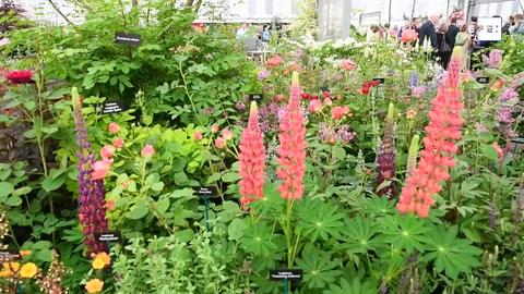 Un jardín diseñado por Catalina de Cambridge, la gran atracción del Chelsea Flower Show