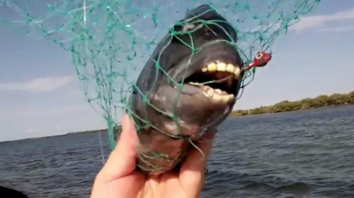 Ekleste fisken noensinne?