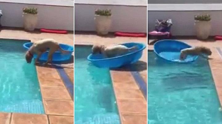 Denne hunden er smartere enn du tror