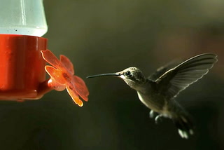 The Buzz About Hummingbirds