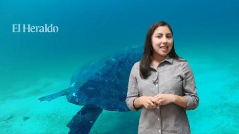 Tierra Adentro: Playas de la zona sur son visitadas por decenas de tortugas Golfinas