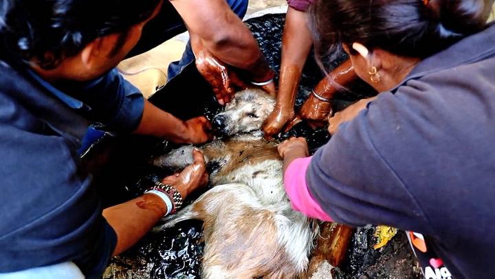 Gatehund reddet fra tjære-mareritt - var limt fast til tønne