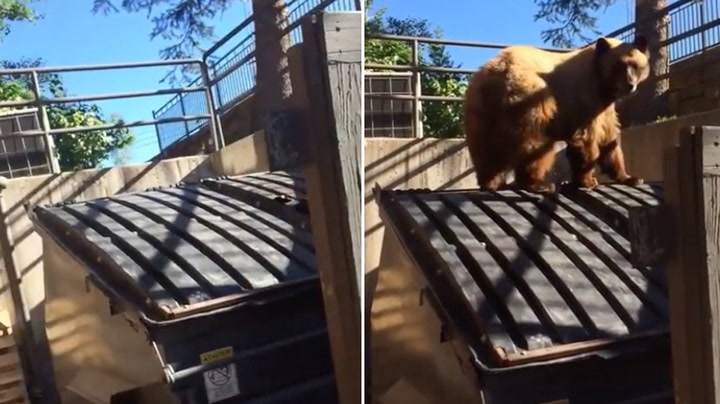Hørte lyder fra containeren - så dukket bjørnen opp