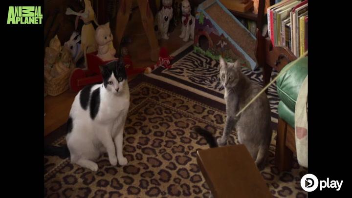 Kattekaos! Er dette kattenes ultimative drømmehjem?