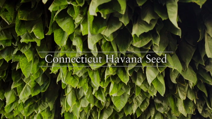 From the Farm: Nick Melillo Talks Connecticut Havana Seed