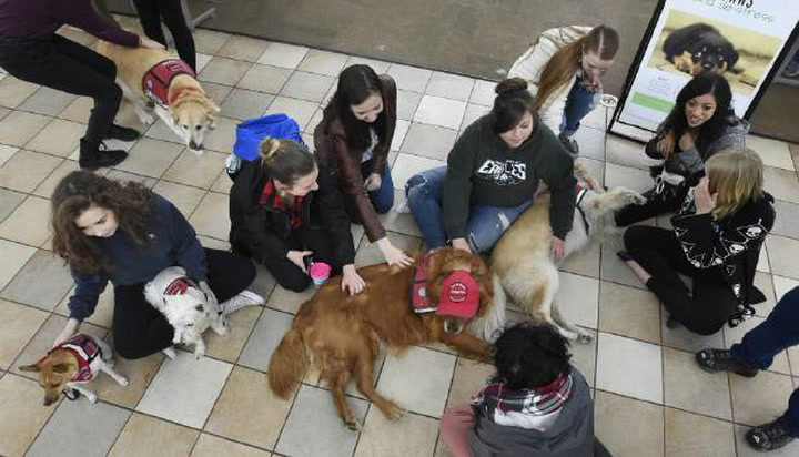 Puppy therapy at Pikes Peak Community College