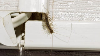 4 Key Facts You Probably Didn't Know About Centipedes