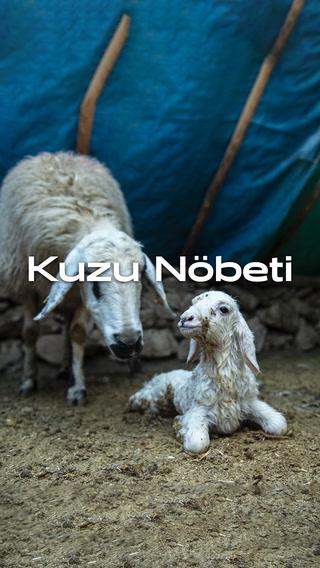 Kuzu Nöbeti