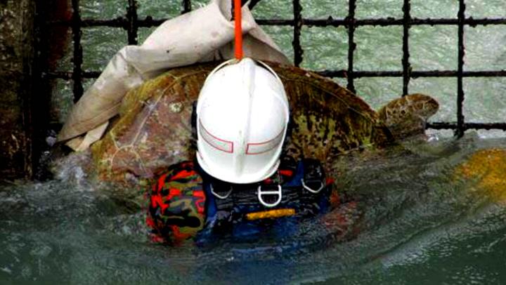 Han reddet enorm skilpadde fra drukningsdøden