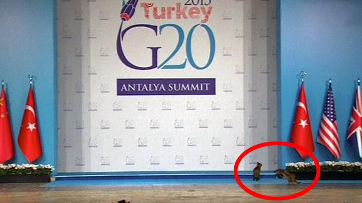 Løskatter stjal G20-scenen