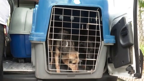 Refugio en Rio pone perros y gatos en adopción durante pandemia