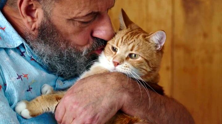Slik gikk katten Bento fra hjemløs til internett-kjendis