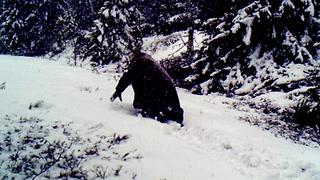 Da Oddvar så på viltkamera, skjønte han lite