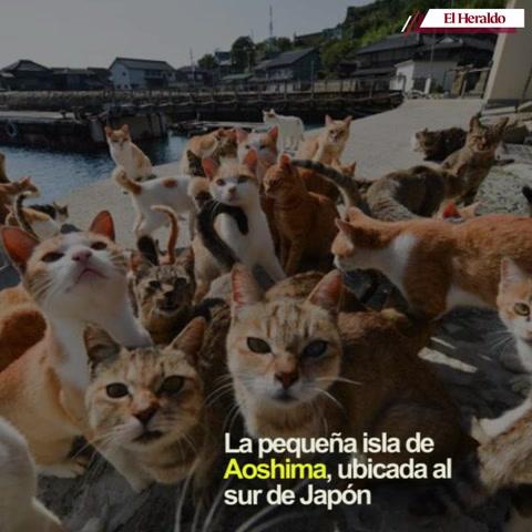 Descubre cómo es el paraíso de los gatos en Japón