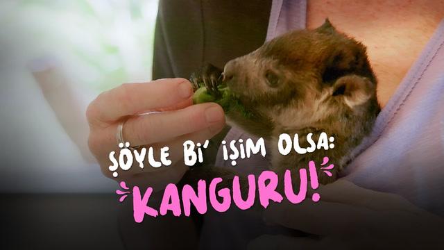 Şöyle bi' işim olsa: Kanguru yavrusu bakıcılığı